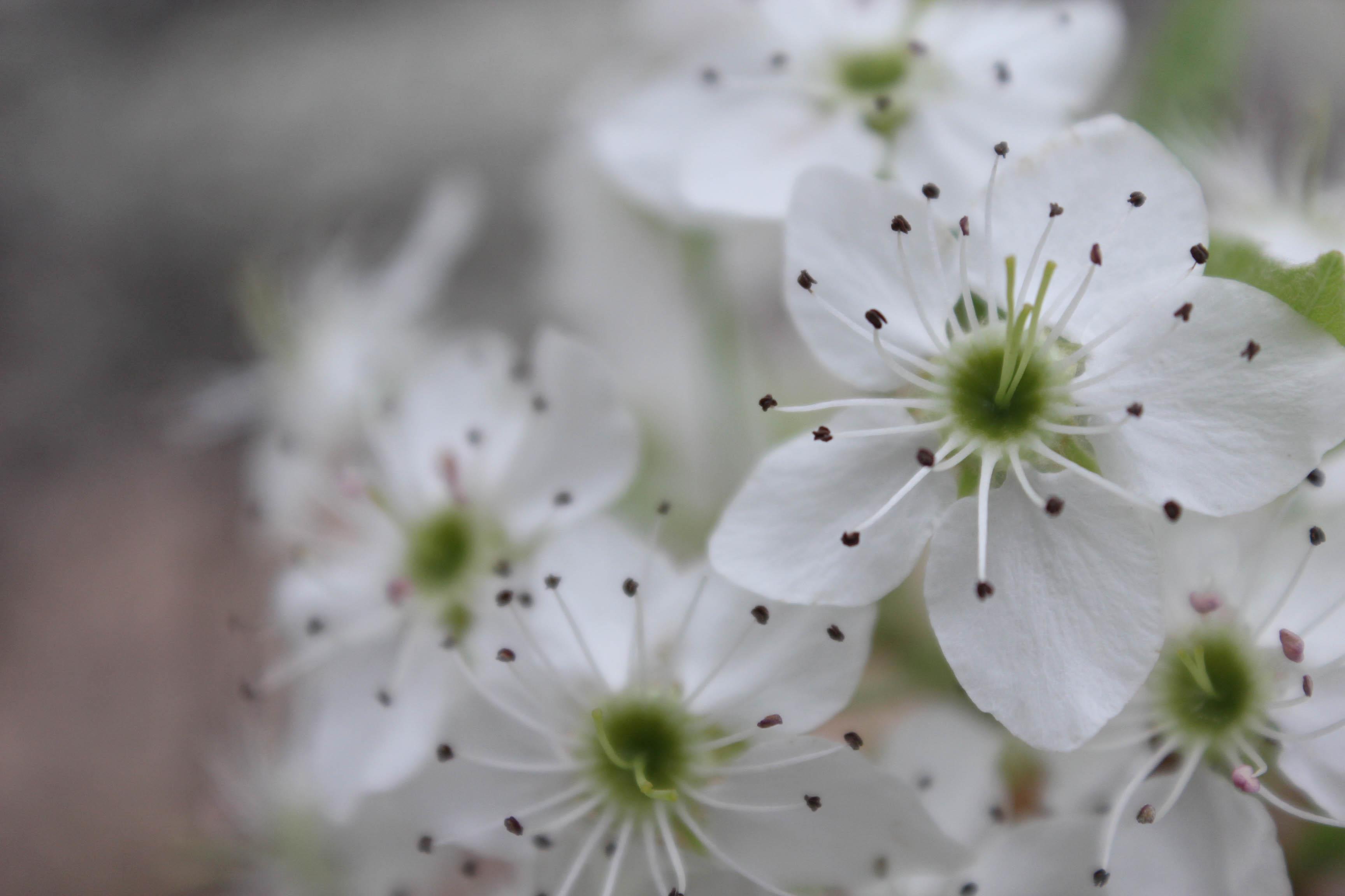 Flowers Botany For Design